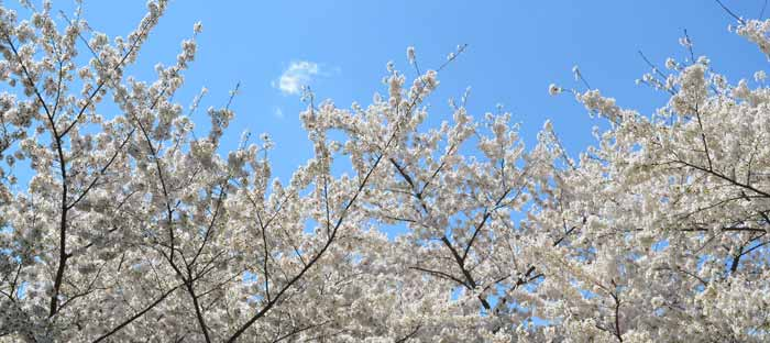 Spring is a wonderful time to enjoy shopping, dining, and the wonderful sights in Bensalem, Bucks County PA